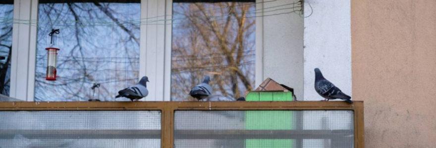 se débarrasser des pigeons sur son balcon